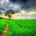 LECȚIE ONLINE: Fenomene ale naturii: ploaie, ninsoare, vânt, fulger, tunet.