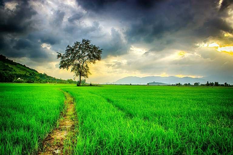 LECȚIE ONLINE: Fenomene ale naturii: ploaie, ninsoare, vânt, fulger, tunet