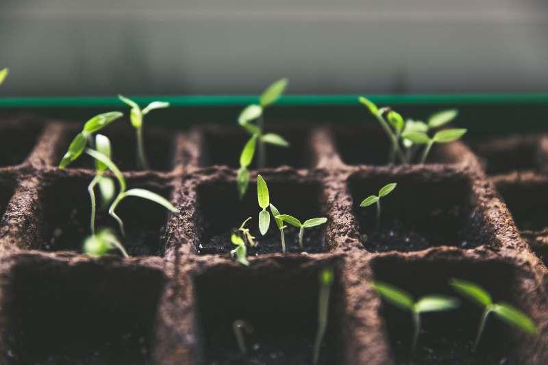 LECȚIE ONLINE: Înmulțirea plantelor
